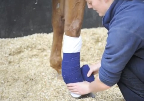 How to apply a stable bandage correctly