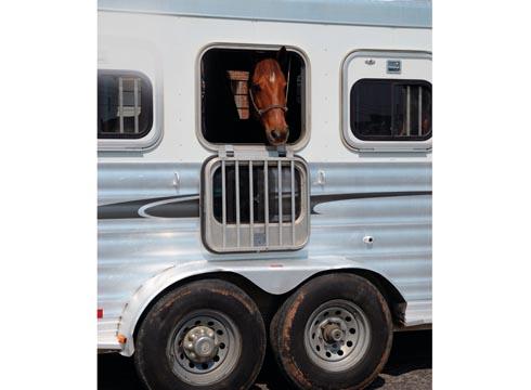 Horse in horsebox