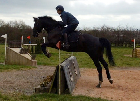 Rosie Fry's Archie cross-country schooling
