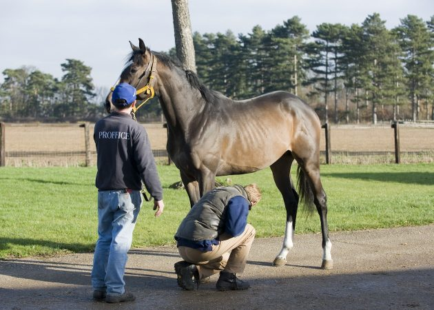 Horse being examined by vet