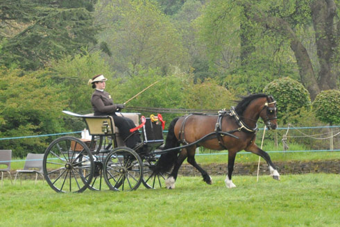 Emily Ham and Crossfield Glory standing private driving champions at a show
