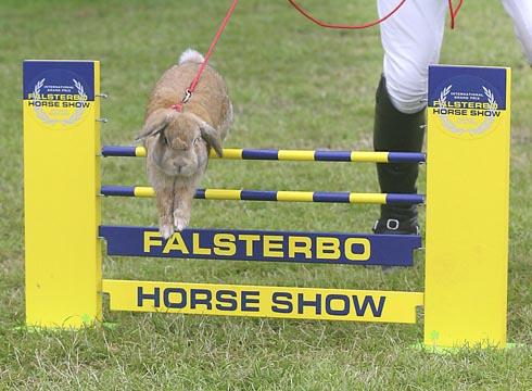 James Davenport enjoy rabbit jumping at Falsterbo