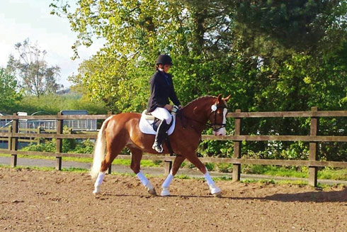 Emily Ham's Alfie warming up for ridden dressage with Naiomi