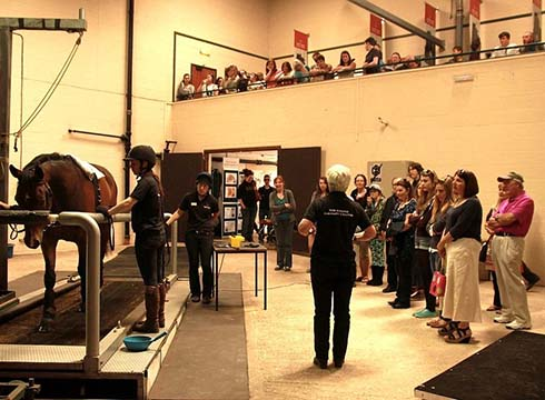 Students look on as a horse is worked on the treadmill