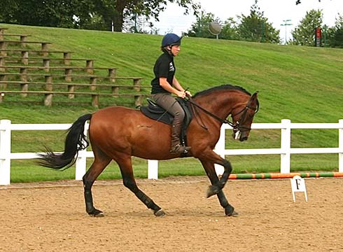 A horse working outside in canter at Hartpury