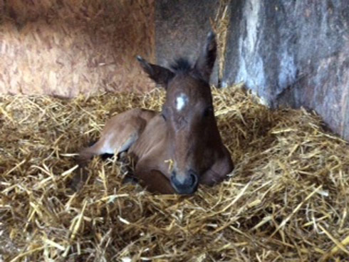 Lily's foal