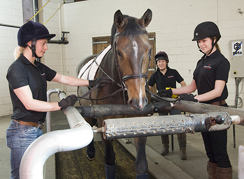 A horse on a treadmill at Hartpury Equine Therapy Centre