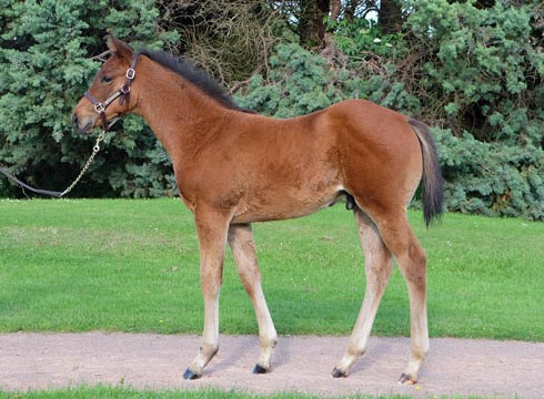 Foal by Frankel, out of Crystal Gaze
