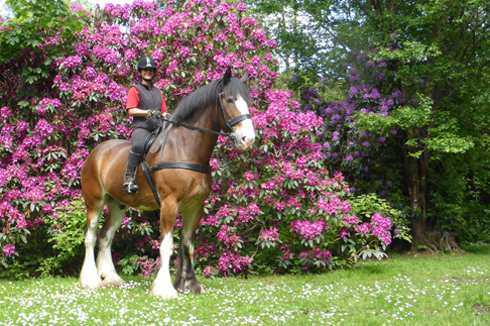 Rehome a Horse month