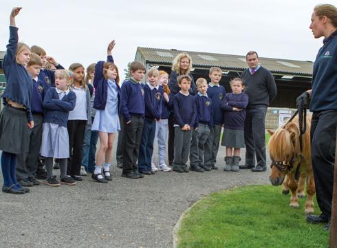Image of: Stray Rspca Bid To Teach Animal Welfare In Schools Feedreader Rspca Bid To Teach Animal Welfare In Schools Horse Hound