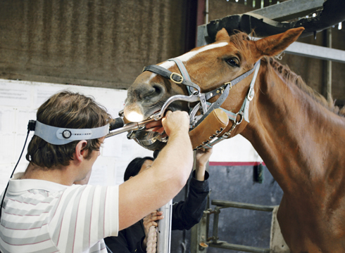 New equine dentistry degree course