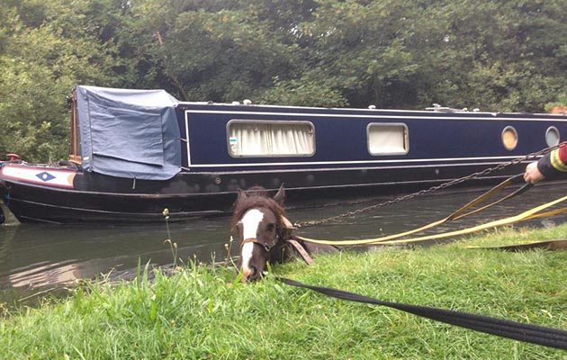 The horse was rescued from the canal by the fire and rescue service