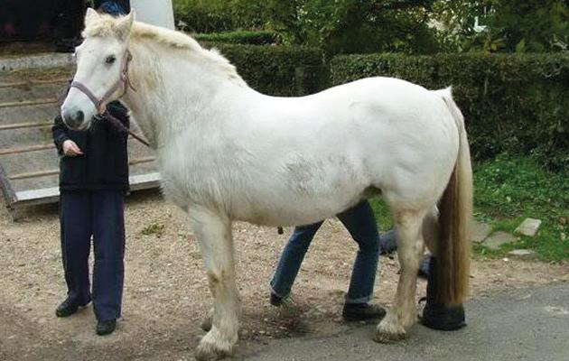 An overweight horse