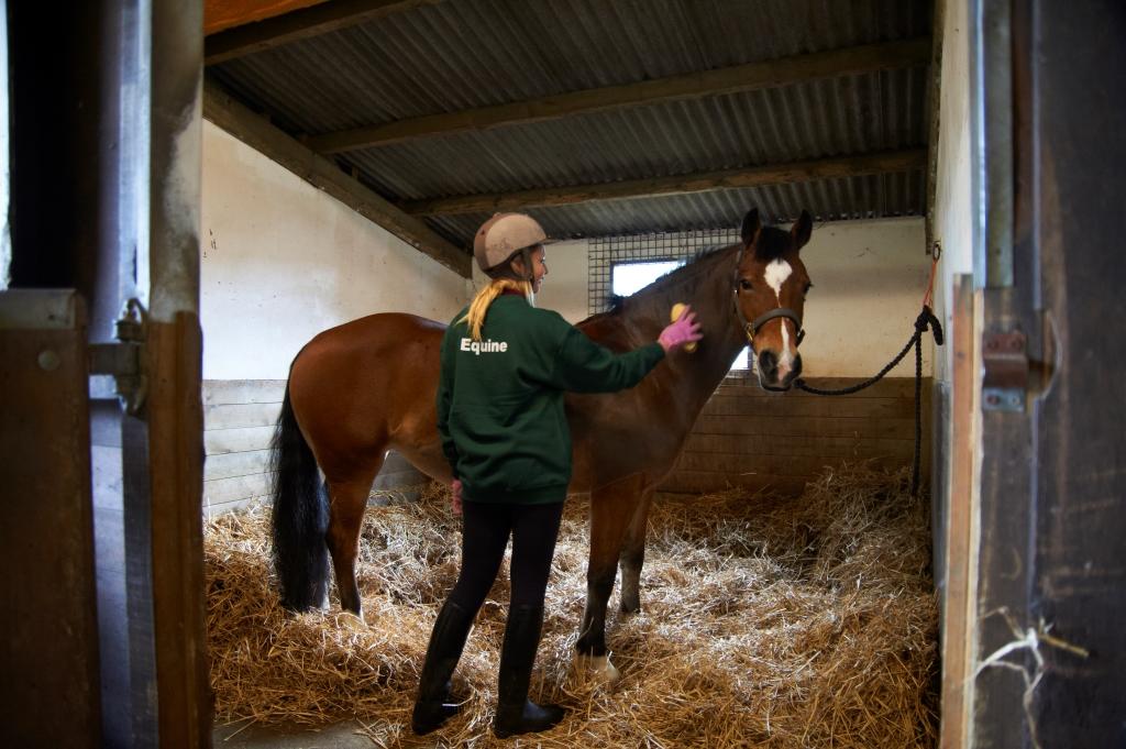 Writtle College Apprenticeships Promotion Horse Amp Hound