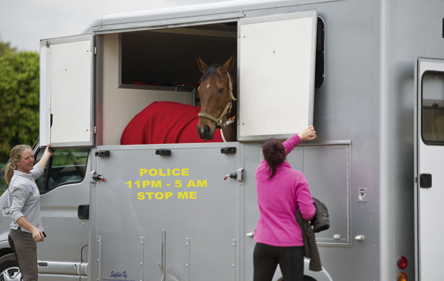 Horse Trailers Page 2 Of 4 Horse Hound