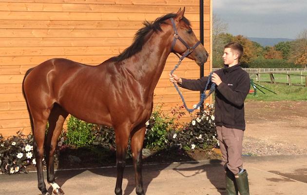 Alexandra Dunn's racing blog: Will Gordon and Hoy Hoy