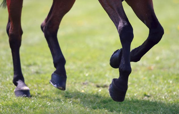 7 ways to perfect your canter-to-trot transition