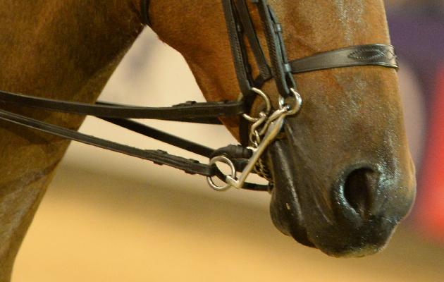 Pony bitting concerns