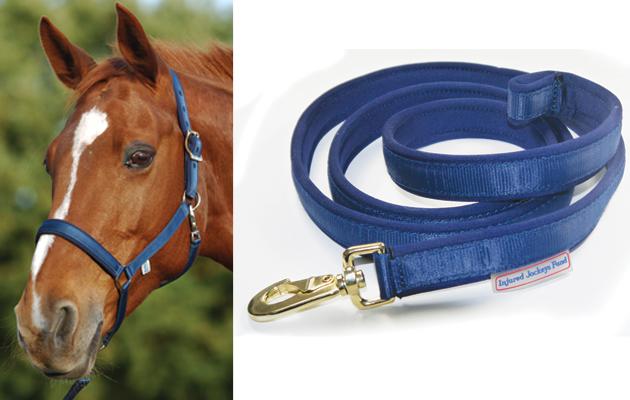Horse-Present
