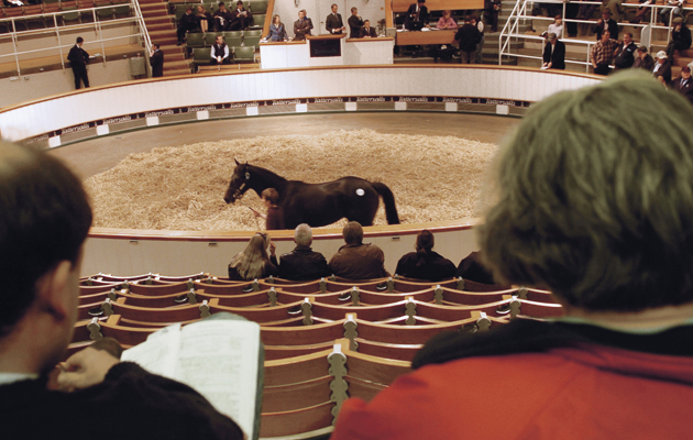 Horse sales and elite auctions