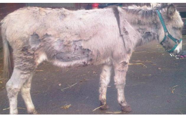 donkey stabbed