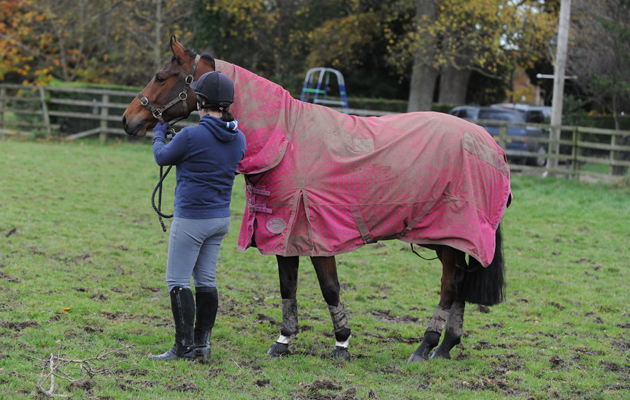 Kelly ward with horse in paddock, rugged, covered in mud after rolling, attaching lead rope to head collar, horse recall