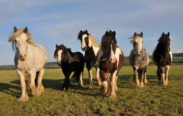 Redwings Merges With Scottish Horse Rescue Charity Horse