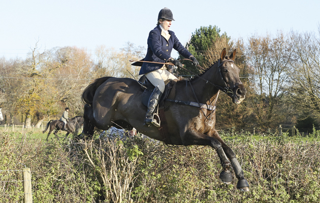 Denman Thought IÕd send you this image of Denman out hunting with the Bicester with Whaddon Chase at Frampton-on-Severn (Berkeley country) last Weds (3/12).  Kind regards  Louisa