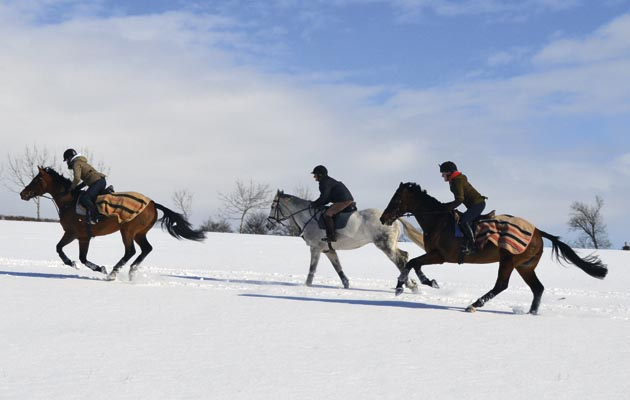 riding on snow is it safe horse hound