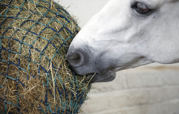 DO NOT USE IN NEGATIVE CONTEXT horse eating haynet with hay and haylage ASKS 15 JAN 2015