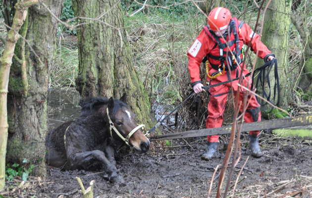 horse rescued from icy bog