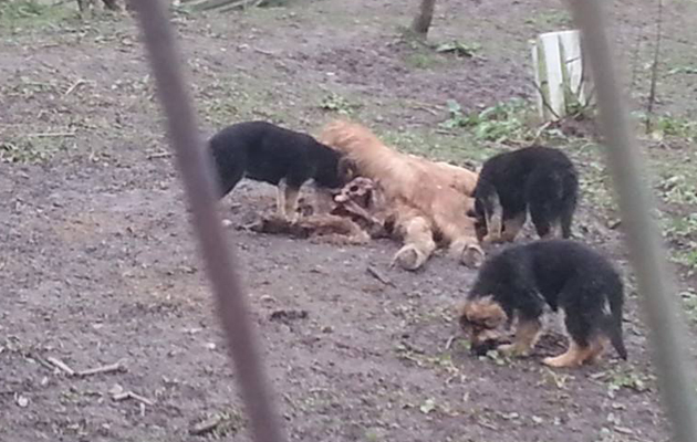 Dog Rescue North West England