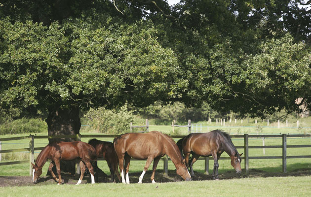 The National Equine Health Survey