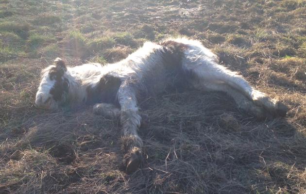 foal dumped