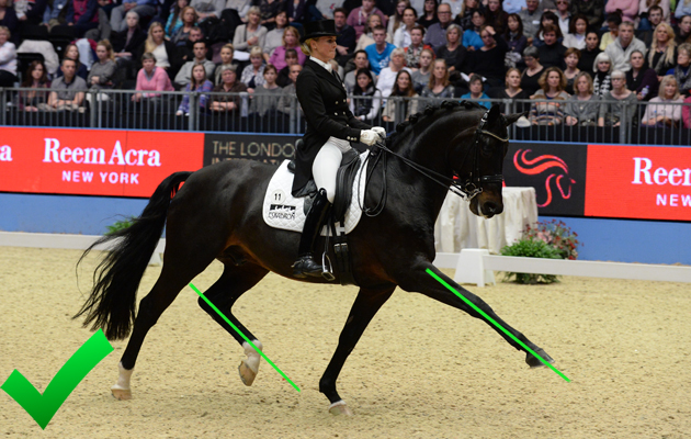 Photographing dressage horses: how to show your horse off to the max
