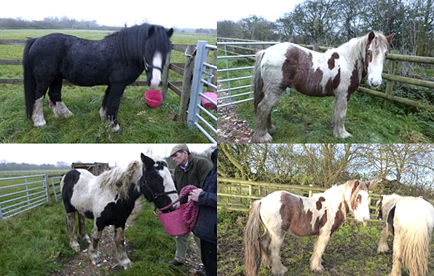 Three stolen rescue horses found and recovered to secret location *Update*