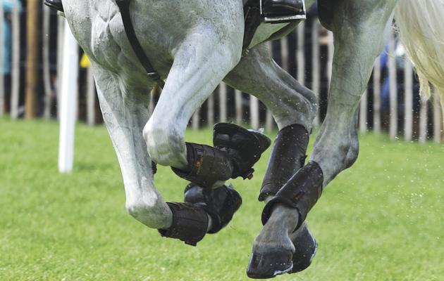 eventing legs
