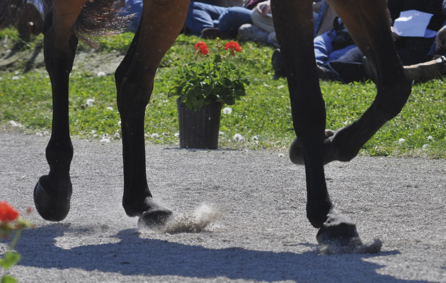 Check Ligament Injuries In Horses Symptoms Treatment And Prognosis