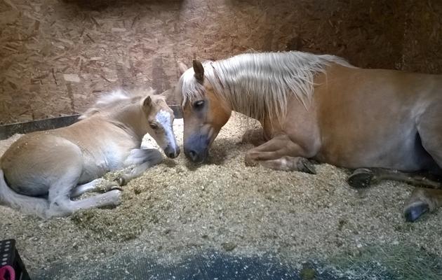 adorable foals