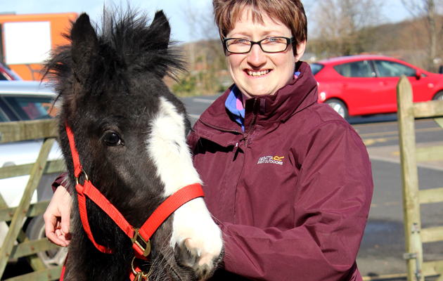 foal rescued