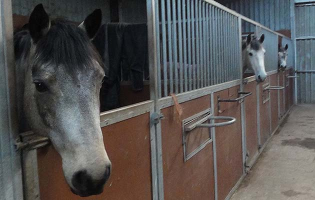 Could one of these be Pony Mad Mum's Mr Right?