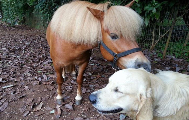 horses with unusual companions