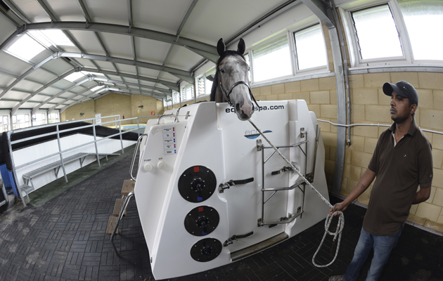 13 reasons to take your horse to an equine spa