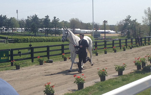 Francis Whittington and Easy Target at the first trot-up at Rolex Kentucky 2015