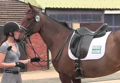 https://www horseandhound co uk/exclusive/treborough-horse
