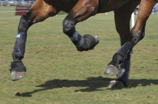 Horse Riding Business Plan