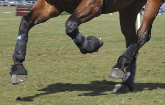 keep horses legs healthy