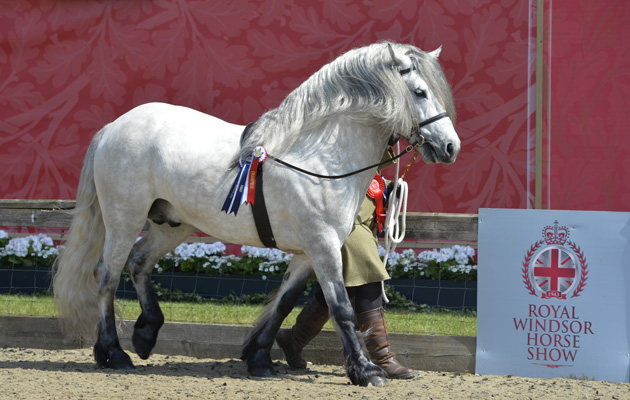 record number of showing entries at this year's Royal Windsor Horse Show