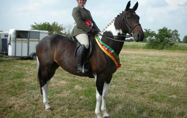 6 cracking coloured horses for sale this week [PICTURES ...