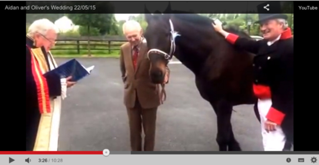 man marries horse